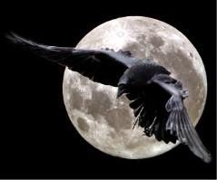 RavenKill