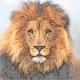 lion_job